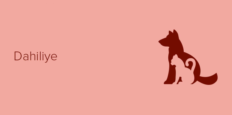 Dahiliye