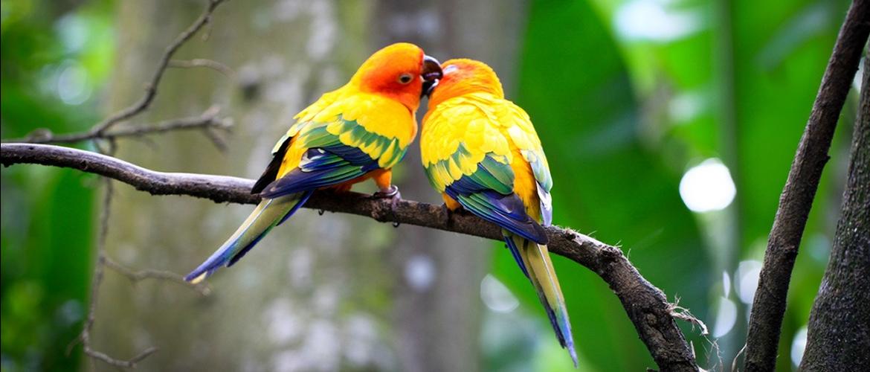 Hayvanlar, hayata renk katar.