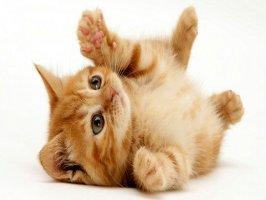 Kedi Eğitimi Videosu Kapak Resmi
